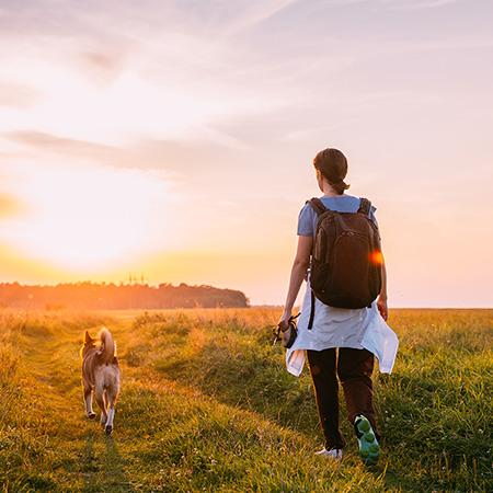 Passeios com o cão: importância e cuidados